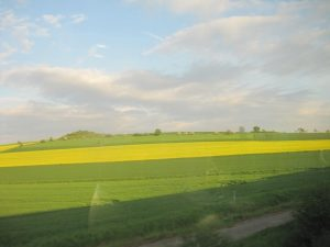 bright green and yellow flat fields against a cloudy sky