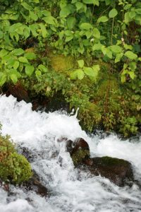 white water rushes over rocks with moss and green leaves on either side
